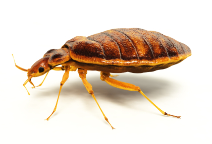 Greenville Bed Bug Control Sc Exterminators Titan